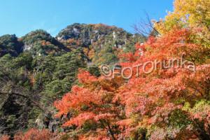 Japanischer Ahorn im Oktober, eine prägnante Reisezeit für Japan