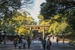 Tokio Reiseführer Top 9 Meiji Schrein