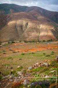 Wandertour auf Fuerteventura - Reisetipps von TRAVELhunka